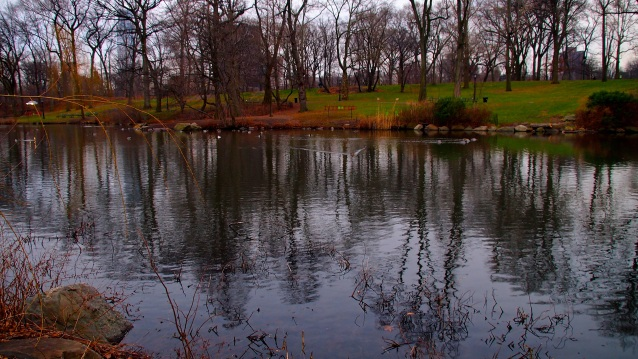 Early evening at the pond.