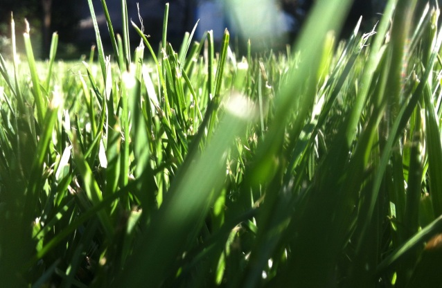 Day 216:2 blades of grass