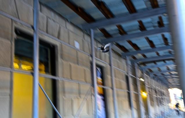 Day 71:3 pigeon under scaffolding