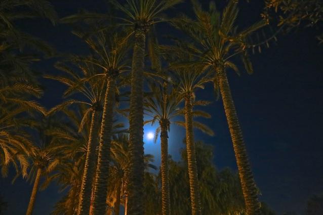 Day 73:3 palm tree full moon