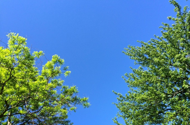 Day 134:3 colors of spring