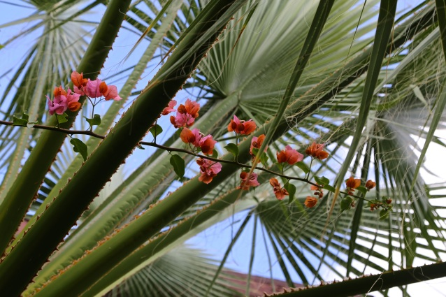 Day 271:3 Palm and flower