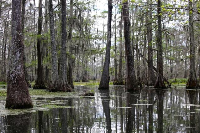 Day 81-4 swamp 2