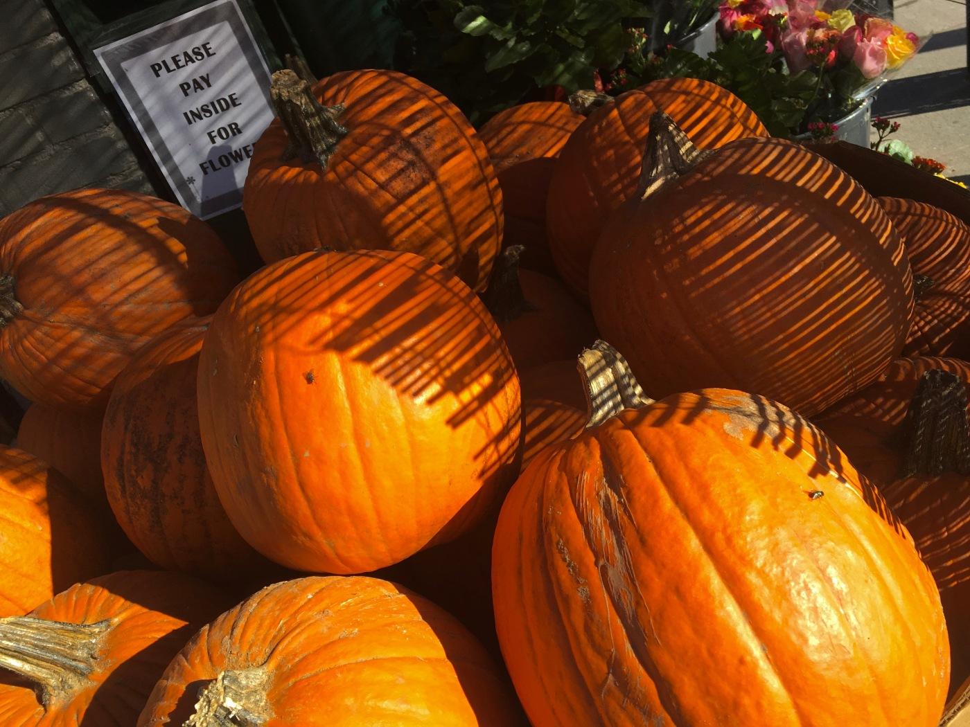 Day 285/5 pumpkins
